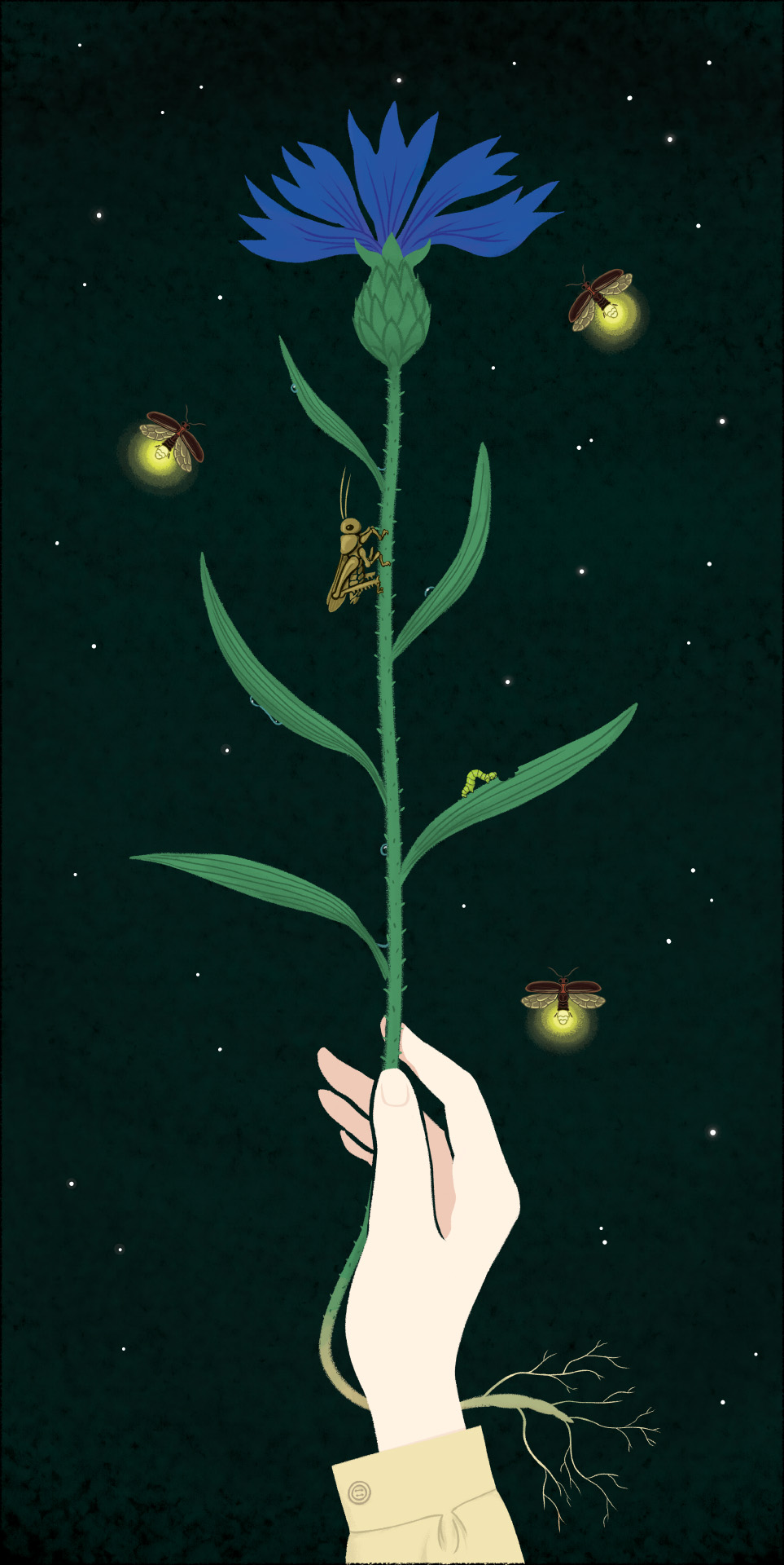 Five – Numbers - Illustration © Stefano Patanè